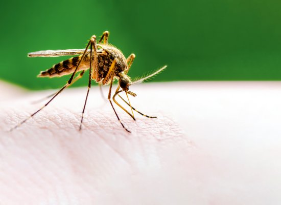 Das Mücken-Quiz