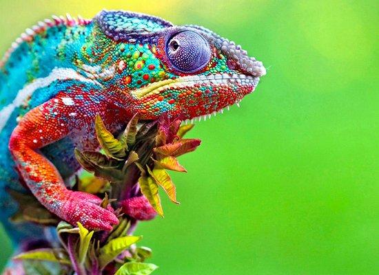 Video: Reptiles