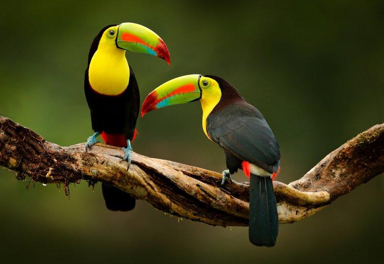 Video: Birds
